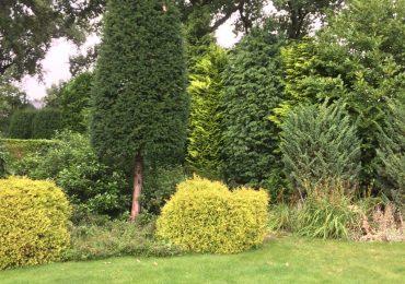Onderhoud gazon en tuinbeplanting Hoveniersbedrijf Weerman