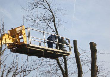 Bomen rooien Hoveniersbedrijf Weerman