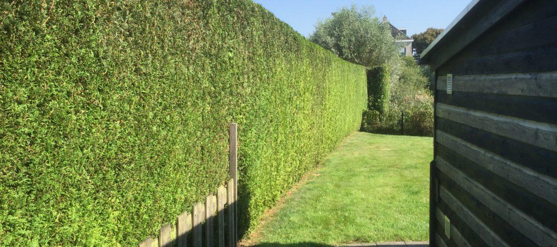 Tuin onderhoud, snoeien van hagen, maaien - Sander Weerman Hoveniers