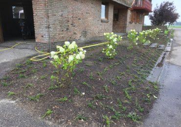 Plantmateriaal en aanplanten Hoveniersbedrijf Weerman