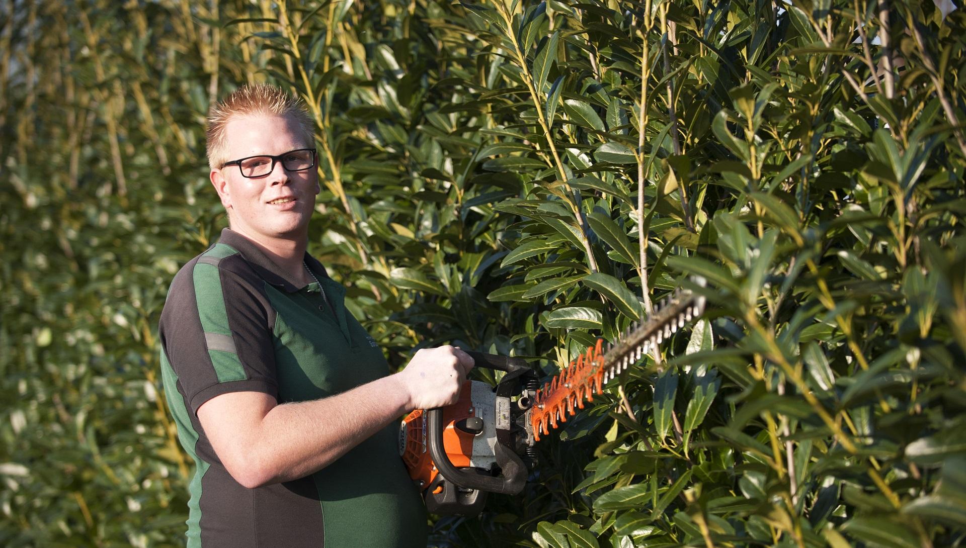 Hoveniersbedrijf Weerman snoeien van hagen